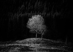 Within Obscurity.jpg (Dylan Nardini) Tags: trees winter light sun white snow black tree water monochrome dark landscape scotland ray branch bright branches fir highlight westhighlands 2015 lochard locharklet lochchon