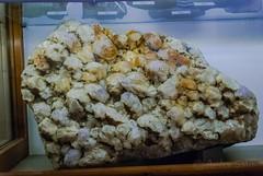 DSC_7119 (andrey.salikov) Tags: january 2015 природа музей жж nikond60 латвия рига прибалтика 180550mmf3556