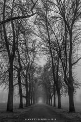 MistAlley (Antti.Iiskola) Tags: autumn trees blackandwhite bw mist fall monochrome fog espoo finland alley syksy sumu kuja puut mustavalkoinen
