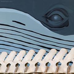 watch your backbone ... (ewaldmario) Tags: vienna macro museum composition painting skeleton nikon naturhistorisches whale spine nhm wal backbone naturalmuseum satiric wirbelsule humorious ewaldmario watchyourbackbone