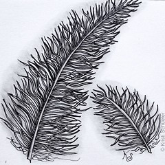 "#zentangle 2015-062, ""One Zentangle A Day"" day 29, the one with a feather (or two). I was advised to leave the feather on its own, but it was too unbalanced so I added a second one. (kurki15) Tags: square drawing squareformat zia tangles zenart 365project zentangle meditativeart ozad zendoodle iphoneography instagramapp uploaded:by=instagram zentangleinspiredart onezentangleaday 365zentangles 2015zenmar dailytangles"