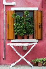 Pink window (SLpixeLS) Tags: italy italie italia venise venezia burano house maison frontage faade window fentre color couleur colorful color plant plante