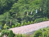 Massive cemetary (Stop carbon pollution) Tags: japan 日本 honshuu 本州 saitamaken 埼玉県 chichibu 秩父 34kannonpilgrimage 三十四札所 kantou 関東