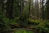 IMG_4250.jpg (Backpacking With Bacon) Tags: washington northerncascades hiking mtpilchuck granitefalls unitedstates us