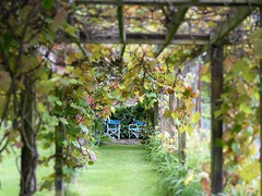 Pergola in a dream (oh.suzannah) Tags: dof pergola archway vines garden seat