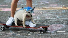 Fremont Solstice 2016  1764 (khaufle) Tags: solstice fremont wa usa skateboard dog