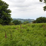 GOC Berkhamsted & Frithsden 009: Ashridge Estate thumbnail