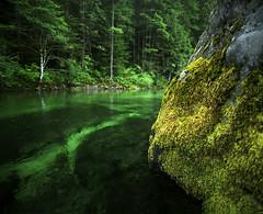 The many places of green (Zeb Andrews) Tags: opalcreek 120film kodakektar100 green oregon landscape pentax6x7 mediumformat 6x7 colorfilm pacificnorthwest