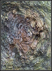 (Caro Rolando) Tags: tronco arbol rbolseco colores color