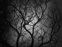 The veins of nature (christianhaward) Tags: trees naturaleza tree nature blackwhite rboles branch rbol trunk tronco rama blanconegro degradado