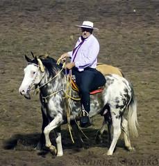 190 Festival de doma y folklore jesus maria cordoba 02 (raneroandres2013) Tags: horses primavera argentina argentine festival caballos spring nikon maria jesus folklore cordoba tamron gauchos gaucho doma