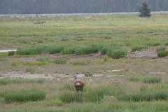 HomerArea91 (alicia.garbelman) Tags: alaska homer wildliferefuge birds sandhillcranes