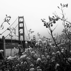 Flowers & Steel (Norman H.) Tags: bridge flowers steel blackandwhite sanfrancisco fog misty moody nature gloomy goldengate travel