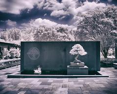 National Bonsai & Penjing Museum (zachstern) Tags: washingtondc nationalarboretum bonsai penjing infrared ir xnitecanong9 maxmaxcom clouds trees entrance