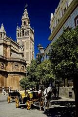 SEVILLA (Susana M.L.) Tags: sevilla giralda catedral caballo cochedecaballos ol andalucia horse catholicchurch church carruaje arquitectura turismo spain