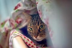 Under the blanket (Matja Skrinar) Tags: nikon 1025fav 100v10f