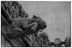 Gargouilles (13) (Phil2No) Tags: gargouille