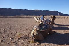 DSC06754 (cle1759) Tags: saharra morroco travel paisaje