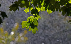 Autumn Bokeh (jrussell.1916) Tags: leaves foilage autumn illuminated green waterdrops bokeh canonef70200f4lis14tc