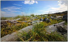 Island View Beach (CanMan90) Tags: islandviewbeach beach logs sand grasses clouds saanich saanichpeninsula vancouverisland britishcolumbia cans2s canon rebelt3i trees outdoors summer sunshine