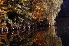 Reflets d'automne au pays noir! (kiareimages1) Tags: belgique charleroi portdelandelies automne reflets paysnoir hainaut fleuvesdeurope mostbeautifulpictures