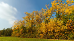 Sunny surprise (FocusPocus Photography) Tags: herbst autumn fall laub foliage colours farben bume trees