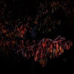 TERRA INCOGNITA (Grant Simon Rogers) Tags: grantsimonrogers  fujifilmx100t flneur flashefx20 flnerie fujiflasher flasher flashing sundayflashing sundayafternooninthepark brockwellpark walledgarden hernehill lunchpoetry sundaytrousers aconversationaboutphotography adropofautumnalstuff littleengland dogspotting animamundi individuation inbetweenshowers rain illumination colour tobemorepreciseitwasthecolourofheartache thefirst10000 themanwhoflashedattrees terraincognita lambeth landingplaceforlambs london londinium almosttomuch saturated technicolor daylightwithflash dayfornight americannight godzilla fusion16