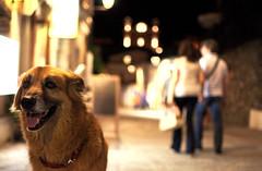 Perch lui merita rispetto (Diego Menna) Tags: cane dog diegomenna nikon d90 night perchluimeritarispetto nonabbandonareicani no abbandono explored explore