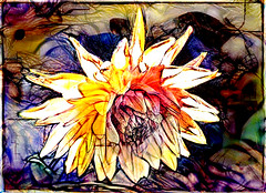 The Abstracted Dahlia (Steve Taylor (Photography)) Tags: dahlia art digital abstract newzealand nz southisland canterbury christchurch northnewbrighton flower petals lines