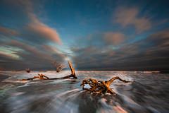 Bone yard -EXPLORED (Riddhish Chakraborty) Tags: seascape beach sc nature bay atlantic charleston botany cloudscape edisto longshutterspeed