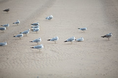G38824_Brighton-Beach (aamengus) Tags: nyc november usa ny newyork brooklyn america unitedstates brightonbeach ussr nuevayork urss 2014 udssr étatsunis littleodessa ссср сша ньюйорк eos5dmarkiii маленькаяодесса брaйтонбич
