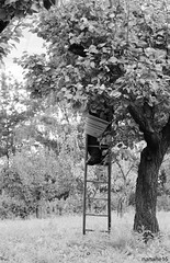 apricot_picking (nanane15) Tags: trip travel trees light summer portrait sky blackandwhite bw sun mountain tree green feet scale field grass canon garden point person foot grey switzerland photo nohead holidays day afternoon suisse symbol head swiss horizon jardin rhne ombre line hidden step journey valley land apricot tradition grandad vacations moutains familly picking greysky apricots vegetal sunnyday valais ambiance typique portraitbw flickrunitedwinner eos600d canoneos600d nanane15