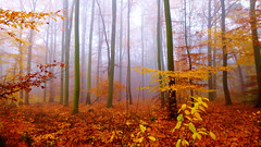 Colorful Autumn Fog Forest (obscure.atmosphere) Tags: wood autumn trees wallpaper sky orange brown white green nature leaves yellow fog forest germany poster outside scary bush heaven afternoon foto silent nebel shot sinister hill hamburg herbst natur foggy picture himmel atmosphere eerie creepy gelb grün braun uncanny holz wald blätter bäume wedel atmosphäre atmospheric holstein otono schleswig klövensteen rissen weist neblig uncannily drausen atmosphärisch
