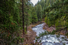 Wash it away (telazac) Tags: statepark trees green nature water oregon canon river unitedstates running flowing rogue needles prospect firs rougeriver t5i