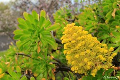 _MG_6606 (dsierraji) Tags: lapalma canaryislands islascanarias bejeque