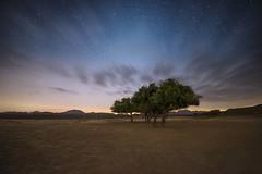 Shine on (samy olabi) Tags: trees night clouds stars photography dawn twilight shine nightscape dusk astrophotography ua 500px ifttt