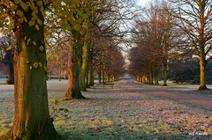 Tree Lined Drive (williamrandle) Tags: uk autumn trees winter england sun landscape drive nikon frost shadows earlymorning dudley westmidlands lawns goldenlight himleyhall d7100 sigma1835f18art