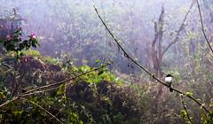 L'oiseau sur la branche (jfgornet) Tags: oiseau brouillard fort brume buisson mg3276