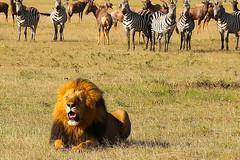 2015 kenyaIMG_2187.jpg (urban genie) Tags: africa kenya safari masai masaimara wildanimals urbangenie
