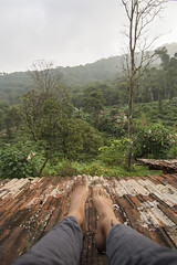 Rooftop View of Coorg (leif.gunnar.boman) Tags: roof plants india plant green feet coffee angel foot nikon estate legs leg honey valley plantation trumpets incredible coorg plantations angeltrumpets incredibleindia honeyvalleyestate d7100 nikond7100 honeyvalleyestates leifboman gunnarboman leifgunnarboman