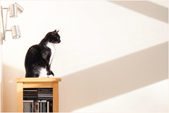 Her Favourite Perch (h_cowell) Tags: uk light shadow sun white black sunshine wall cat canon fur feline sitting cheshire zoom furniture tuxedo macclesfield 500d helenacowell