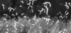 DSC_1961 (Hunter K) Tags: white black field blackwhite sedona depth