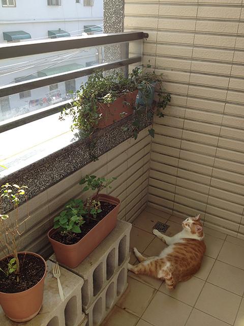 家裡來了一隻貓 貓咪失蹤記