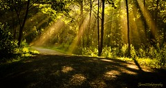 bathed in rays (skeem125) Tags: sunrays trails road golden morning nature