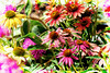 May flowers (NancySmith133) Tags: mayflowers godsgarden centralfloridausa