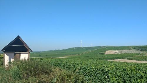 Weinbergshäuschen zwischen Mommenheim und Zornheim