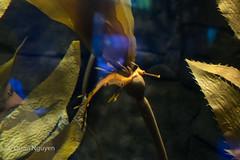 FujiXE2-0188 (QTTheory) Tags: cvg cincinnati ohio newport aquarium newportaquarium fujifilm fujinon xe2 xf 1855mmf284rlmois