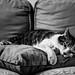 Cat's hard life