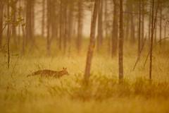 _DSC1442.jpg (Jean-Baptiste ROLLIN) Tags: prairie fort renardroux finlande