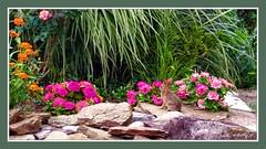Baby Bunny (Kathy_9) Tags: pspx9 layers topazsimplify babybunny rabbit garden flowers pampasgrass hss zenias